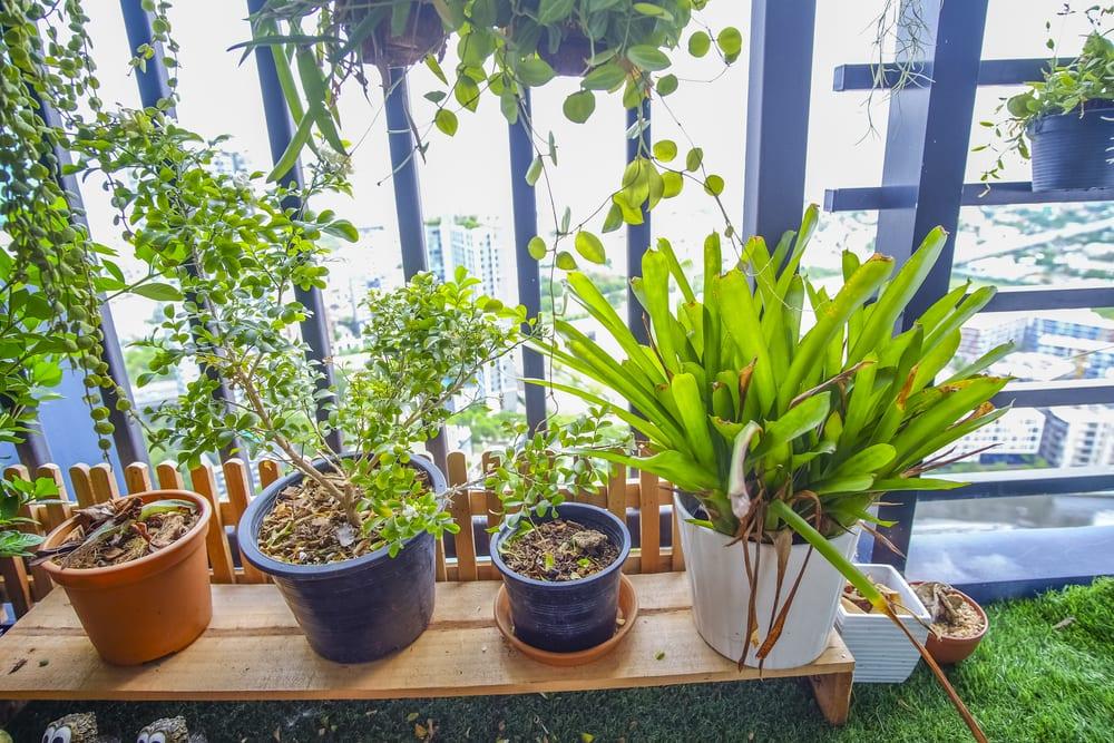 horta-para-apartamento-luminosidade-loft