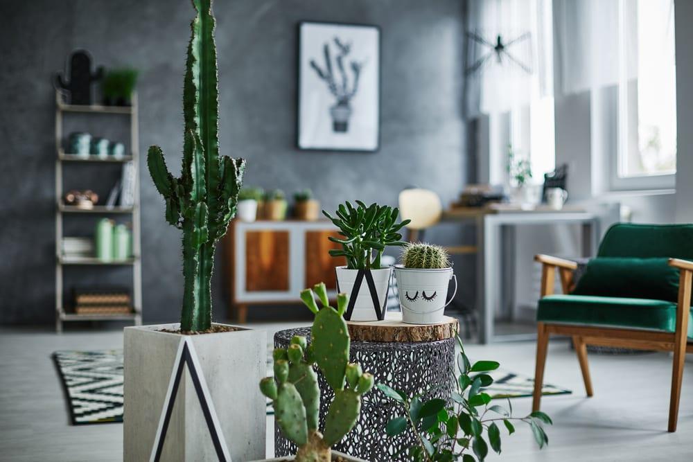 plantas-para-apartamento-cacto-loft