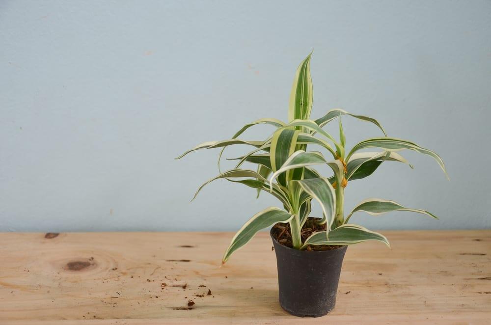 plantas-para-apartamento-pleomate-loft